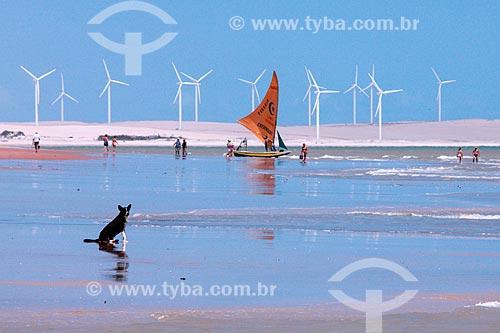 Cachorro na Praia de Canoa Quebrada com o Parque Eólico Canoa Quebrada ao fundo  - Aracati - Ceará (CE) - Brasil