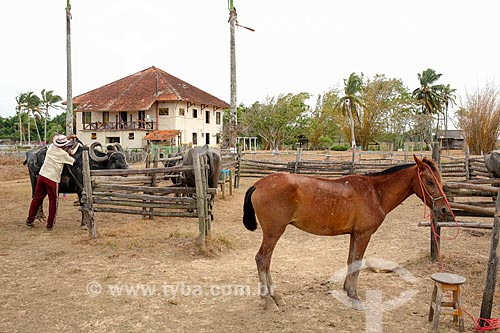 Curral com búfalo e cavalo na Fazenda do Carmo  - Salvaterra - Pará (PA) - Brasil