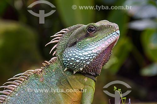Detalhe de lagarto no Reais Jardins Botânicos de Kew  - Londres - Grande Londres - Inglaterra