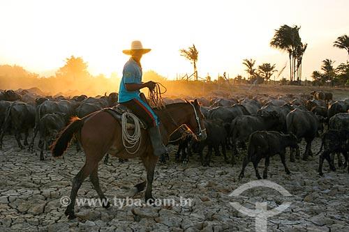 Vaqueiro com criação de búfalos na Fazenda Sanjo  - Salvaterra - Pará (PA) - Brasil