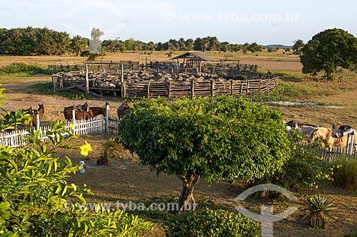 Cavalos e criação de búfalos no curral da Fazenda Sanjo  - Salvaterra - Pará (PA) - Brasil