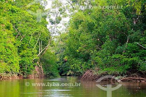 Vista do Rio Camará na Ilha de Marajó  - Pará (PA) - Brasil