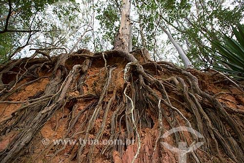 Raízes de árvore na Fazenda São Geraldo expostas devido à erosão  - Paraíba do Sul - Rio de Janeiro (RJ) - Brasil