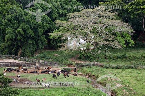 Criação de gado na Fazenda São Geraldo  - Paraíba do Sul - Rio de Janeiro (RJ) - Brasil