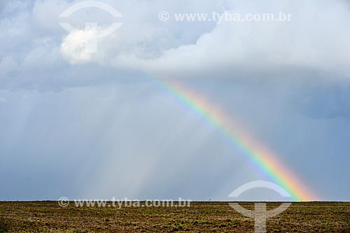 Rainbow - sugarcane plantation  - Mato Grosso do Sul state (MS) - Brazil