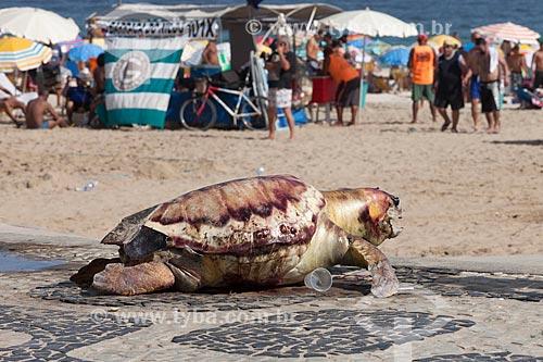 Tartaruga Marinha morta deixada no calçadão da Praia de Ipanema  - Rio de Janeiro - Rio de Janeiro (RJ) - Brasil