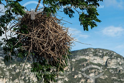 Ninho de pássaro em árvore  - Santana do Riacho - Minas Gerais (MG) - Brasil