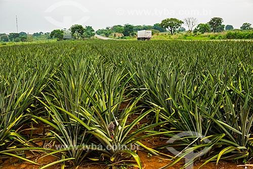 Plantação de Abacaxi (Ananas comosus) às margens da Rodovia Transbrasiliana (BR-153) - também conhecida como Rodovia Belém-Brasília e Rodovia Bernardo Sayão  - Miranorte - Tocantins (TO) - Brasil