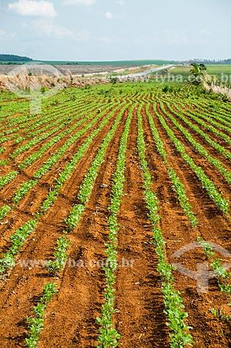 Plantação de Soja às margens da Rodovia TO-455  - Porto Nacional - Tocantins (TO) - Brasil