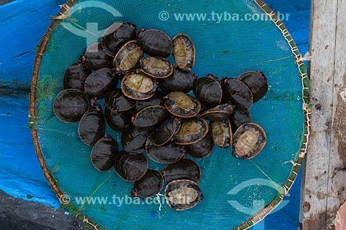 Detalhe de filhotes de Tartaruga-da-Amazônia (Podocnemis expansa)  - Barcelos - Amazonas (AM) - Brasil