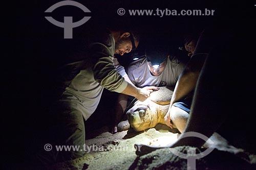 Voluntários do Projeto TAMAR examinando tartaruga marinha  - Linhares - Espírito Santo (ES) - Brasil