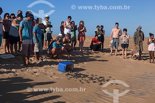 Filhote de tartarugas marinhas transportada por voluntários do Projeto TAMAR para área longe da lama após rompimento da barragem de rejeitos de mineração da empresa Samarco em Mariana (MG)  - Linhares - Espírito Santo (ES) - Brasil