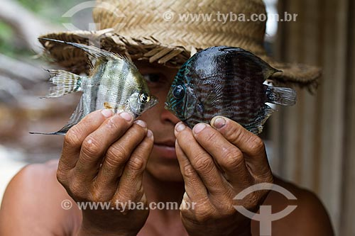 Detalhe de ribeirinho segurando Acará-Bandeira (Pterophyllum scalare) e Acará-Disco Hekel (Symphysodon discus) no Rio Negro  - Barcelos - Amazonas (AM) - Brasil