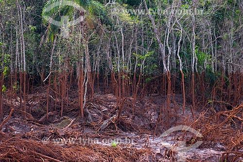 Árvores às margens do Rio Gualaxo do Norte no distrito de Paracatu de Baixo após o rompimento de barragem de rejeitos de mineração da empresa Samarco em Mariana (MG)  - Mariana - Minas Gerais (MG) - Brasil