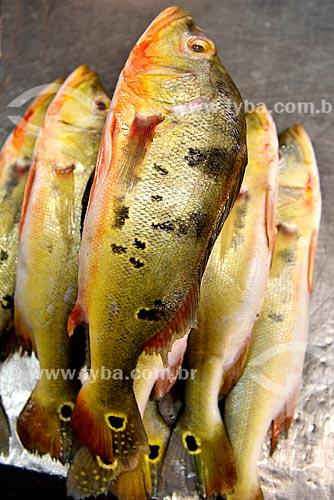 Tucunarés (Cichla ocellaris) à venda Feira da Manaus Moderna  - Manaus - Amazonas (AM) - Brasil