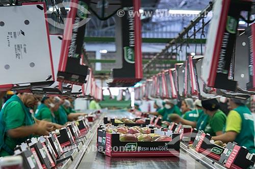 Seleção e embalagem de mangas para exportação - Packing House - Projeto Nilo Coelho - Vale do São Francisco  - Petrolina - Pernambuco (PE) - Brasil
