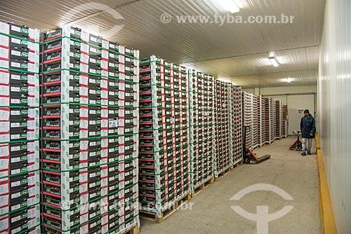 Paletes com caixas de mangas para exportação na câmera fria do Packinga House - Projeto Nilo Coelho - Vale do São Francisco  - Petrolina - Pernambuco (PE) - Brasil
