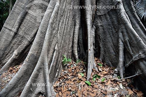 Detalhe de sapopemas de Sumaúma (Ceiba pentandra) no Parque Ecológico do Lago Janauari  - Iranduba - Amazonas (AM) - Brasil
