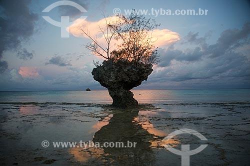 Formação rochosa na orla da Ilha de Pemba  - Ilha de Pemba - Tanzânia