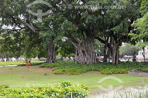 Árvore no Campo de Santana  - Rio de Janeiro - Rio de Janeiro (RJ) - Brasil