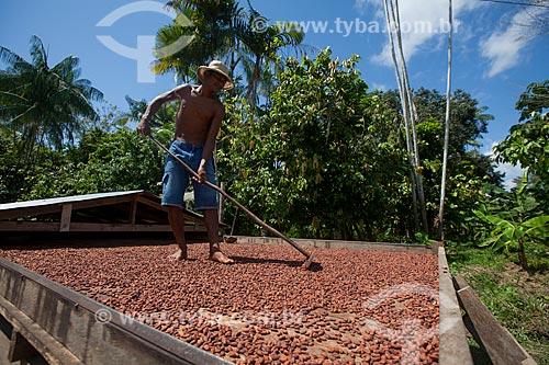 Produtor durante a secagem de cacau nativo na região do Rio Madeira  - Novo Aripuanã - Amazonas (AM) - Brasil