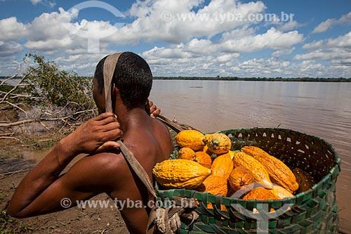 Trabalhador rural carregando cacau nativo na região do Rio Madeira  - Novo Aripuanã - Amazonas (AM) - Brasil