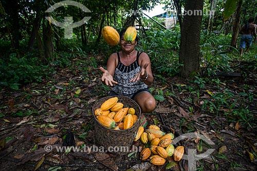 Trabalhadora rural durante a colheita do cacau nativo na região do Rio Madeira  - Novo Aripuanã - Amazonas (AM) - Brasil