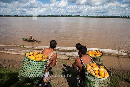 Trabalhadores rurais carregando cacau nativo na região do Rio Madeira durante a colheita  - Novo Aripuanã - Amazonas (AM) - Brasil
