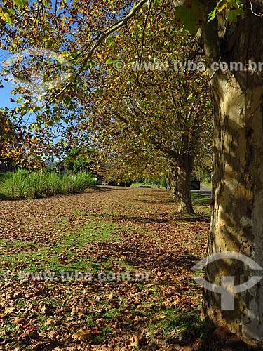 Árvores no acostamento de trecho da Rota Romântica entre as cidade de Morro Reuter e Picada Café  - Morro Reuter - Rio Grande do Sul (RS) - Brasil