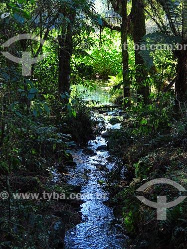 Córrego na cidade de Canela  - Canela - Rio Grande do Sul (RS) - Brasil