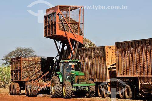 Descarga de cana-de-açúcar durante a colheita mecanizada  - Planalto - São Paulo (SP) - Brasil