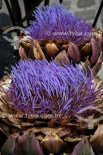 Detalhe de flor da alcachofra (Cynara cardunculus)  - Isle Sur La Sorgues - Departamento de Vaucluse - França