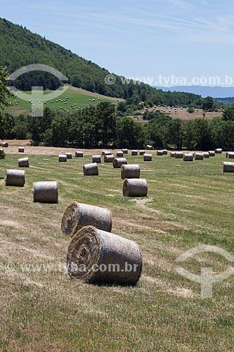 Colheita do feno próximo a cidade de Saumane  - Saumane - Departamento de Alpes da Alta Provença - França