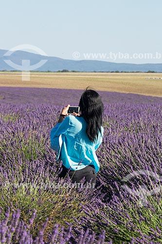 Turista fotografando os campos de lavanda próximo à cidade de Valensole  - Valensole - Departamento de Alpes da Alta Provença - França