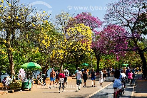 Ciclovia no Parque do Ibirapuera com Ipê-Amarelo e Ipê Rosa (Tabebuia heptaphylla) ao fundo  - São Paulo - São Paulo (SP) - Brasil