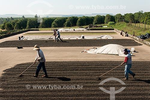 Trabalhador rural espalhando café no terreiro  - Garça - São Paulo (SP) - Brasil