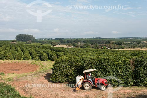 Trator fazendo aplicação de inseticida em plantação de Café  - Garça - São Paulo (SP) - Brasil