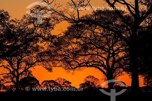 Pôr do sol no Pantanal  - Mato Grosso (MT) - Brasil