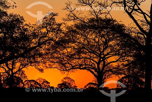 Sunset - Pantanal  - Mato Grosso state (MT) - Brazil