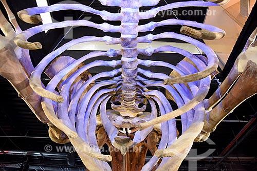 Detalhe de esqueleto de baleia Jubarte (Megaptera novaeangliae) na entrada do AquaRio - aquário marinho da cidade do Rio de Janeiro  - Rio de Janeiro - Rio de Janeiro (RJ) - Brasil