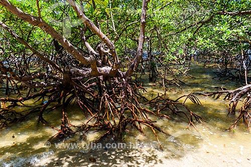 Mangue-vermelho (Rhizophora mangle) na Praia de Moreré  - Cairu - Bahia (BA) - Brasil