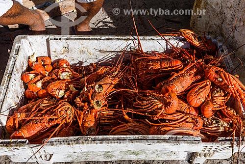 Lagostas frescas no Restaurante Lagosta do Guido - Praia da Cueira  - Cairu - Bahia (BA) - Brasil