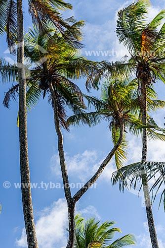 Coqueiro com o tronco em bifurcação na orla da Praia de Bainema  - Cairu - Bahia (BA) - Brasil