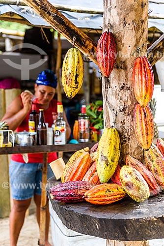 Cacaueiro (Theobroma cacao) em quiosque da Praia do Havaizinho  - Itacaré - Bahia (BA) - Brasil