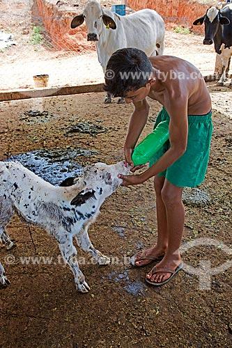 Menino dando leite à um bezerro na Fazenda Serra Azul  - Carmo de Minas - Minas Gerais (MG) - Brasil
