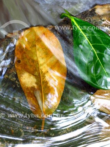 Detalhe de folhas em cascata na Jardim Botânico do Rio de Janeiro  - Rio de Janeiro - Rio de Janeiro (RJ) - Brasil