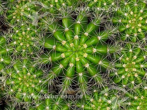 Detalhe de cacto no cactário do Jardim Botânico do Rio de Janeiro  - Rio de Janeiro - Rio de Janeiro (RJ) - Brasil