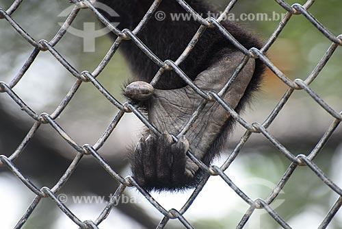 Detalhe de pata de primata no Jardim Zoológico do Rio de Janeiro  - Rio de Janeiro - Rio de Janeiro (RJ) - Brasil