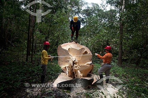 Extração sustentável da madeira na Reserva de Desenvolvimento Sustentável Mamirauá  - Tefé - Amazonas (AM) - Brasil