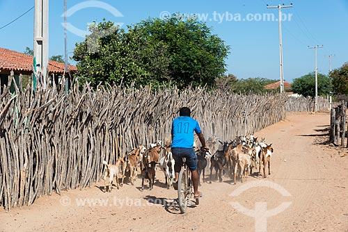 Homem pastoreando criação de cabras (Capra aegagrus hircus) de bicicleta na Aldeia Travessão de Ouro - Tribo Pipipãs  - Floresta - Pernambuco (PE) - Brasil
